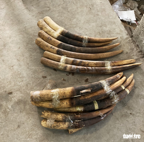Hơn 2 tấn ngà voi, vảy tê tê gắn mác gỗ đỏ cập cảng Hải Phòng - Ảnh 1.