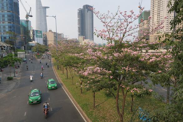 TP.HCM phát động trồng cây tạo mảng xanh làm đẹp thành phố dịp tết - Ảnh 2.