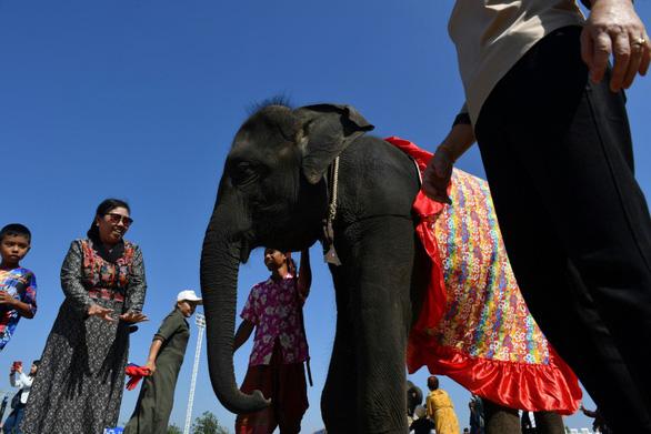 Thảm cảnh của những con voi phục vụ du lịch ở Thái Lan - Ảnh 3.