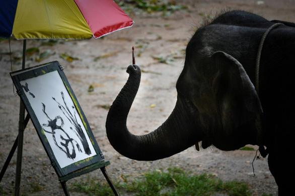 Thảm cảnh của những con voi phục vụ du lịch ở Thái Lan - Ảnh 4.