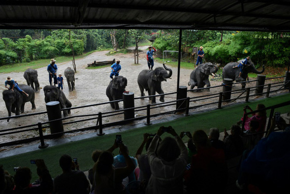 Thảm cảnh của những con voi phục vụ du lịch ở Thái Lan - Ảnh 5.