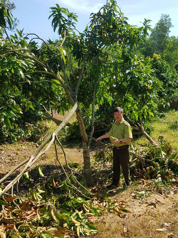 Hỗ trợ gần 800 triệu cho 85 hộ dân bị thiệt hại do voi rừng - Ảnh 1.