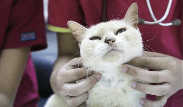 Dân Singapore bỏ đến vài trăm đôla mua bảo hiểm cho thú cưng - Ảnh 1.