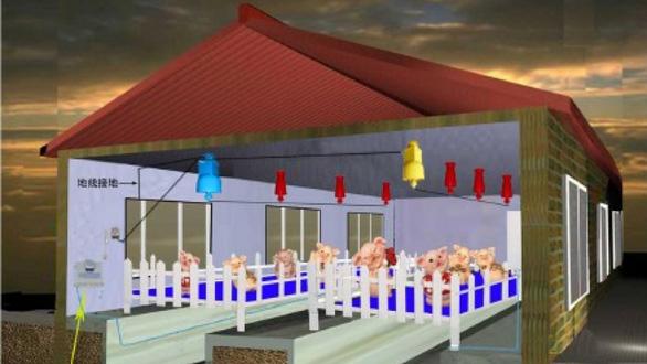 Trung Quốc lắp điện cao áp trong chuồng lợn để diệt dịch tả lợn châu Phi - Ảnh 1.