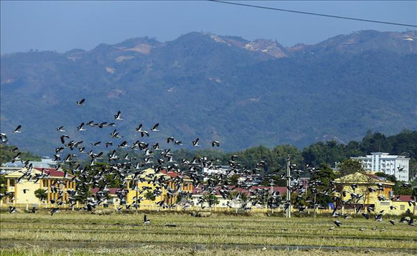 Hàng trăm con cò nhạn quý hiếm xuất hiện ở Mường Thanh - Ảnh 4.