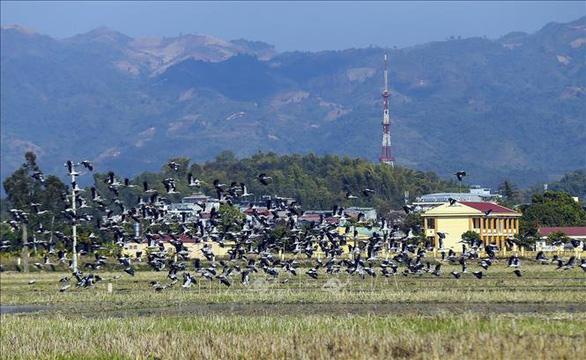 Hàng trăm con cò nhạn quý hiếm xuất hiện ở Mường Thanh - Ảnh 2.