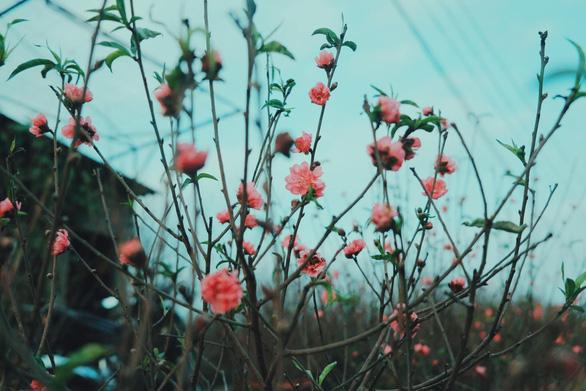 Tết Dương lịch: miền Bắc và Hà Nội mưa rét, miền Nam nắng ấm - Ảnh 1.