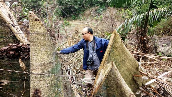Để phá rừng tràn lan, hàng loạt cán bộ kiểm lâm Thanh Hóa bị kỷ luật - Ảnh 1.