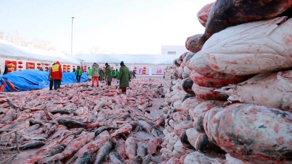 Con cá mè hoa khổng lồ bán với giá gần 10 tỉ đồng - Ảnh 6.
