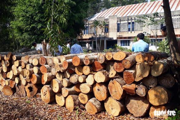 Đốn cây rừng để trồng cây thuốc: Chặt cây không xin phép là vi phạm - Ảnh 3.