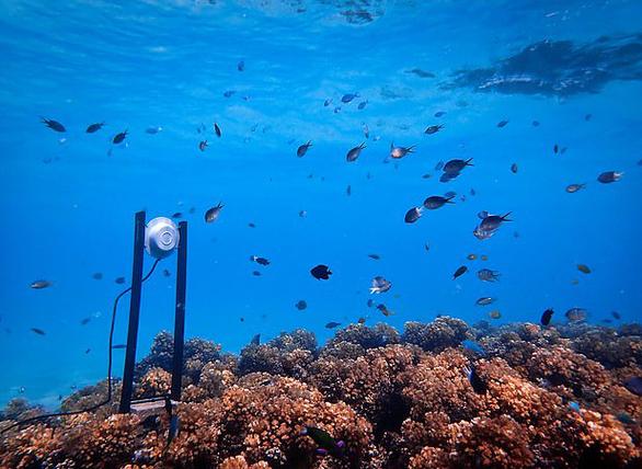 Mở nhạc dưới biển để hồi sinh san hô - Ảnh 6.