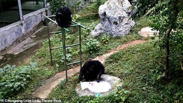 Tinh tinh biết dùng xà bông giặt áo, vắt khô y như người - Ảnh 3.