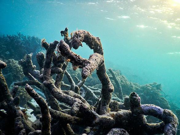 Mở nhạc dưới biển để hồi sinh san hô - Ảnh 3.