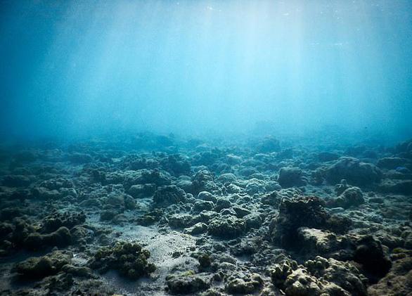 Mở nhạc dưới biển để hồi sinh san hô - Ảnh 5.