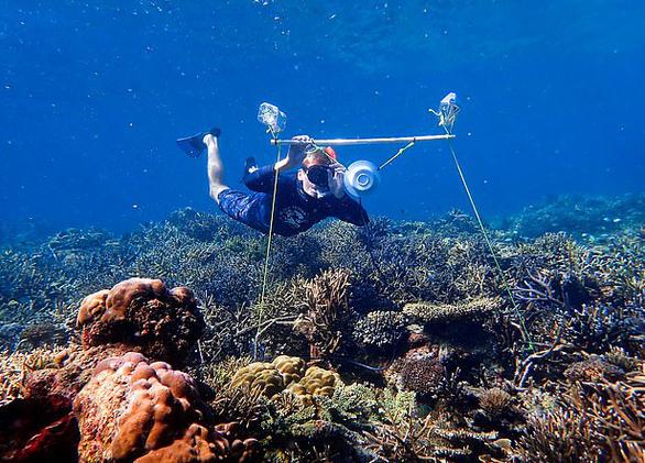 Mở nhạc dưới biển để hồi sinh san hô - Ảnh 1.