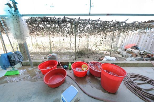 Người dân thị trấn Nghèn vui mừng đón nước sạch về - Ảnh 1.