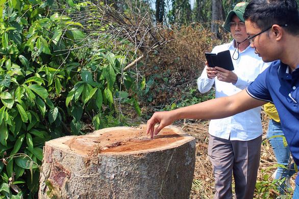 Thanh tra vụ đốn hạ cây rừng tự nhiên trong khu bảo tồn ở Đồng Nai - Ảnh 1.