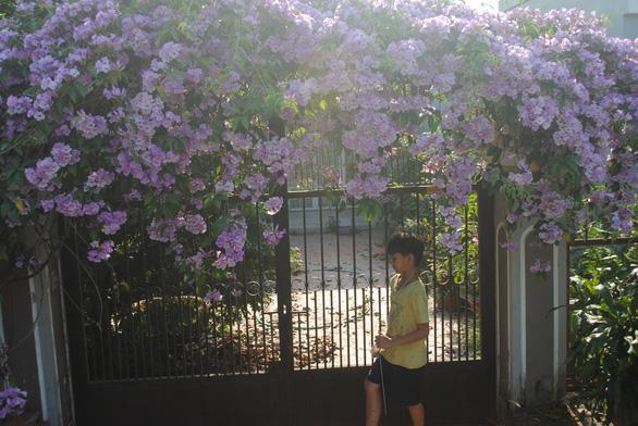 Ngất ngây giàn hoa tỏi được bạn trẻ 'check in' tại Sa Đéc - Ảnh 3.