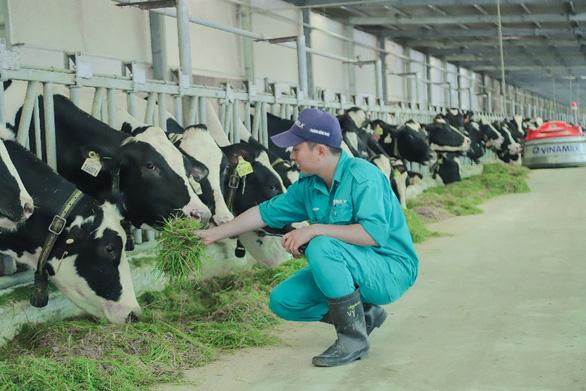 Tết tại resort bò sữa Vinamilk có gì đặc biệt? - Ảnh 1.