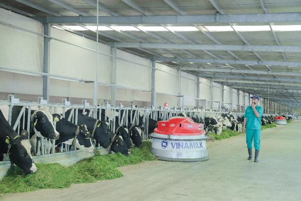 Tết tại resort bò sữa Vinamilk có gì đặc biệt? - Ảnh 2.