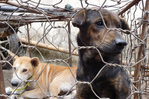 Cấm thịt chó, chính quyền ở Indonesia bảo dân ăn bò, gà ngon hơn - Ảnh 1.