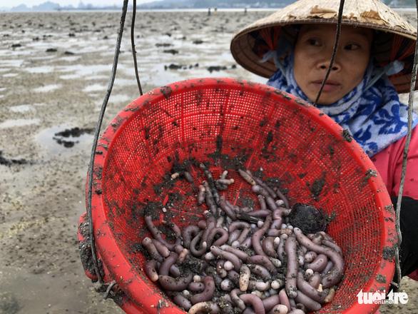 Theo chân những phụ nữ đào vàng ròng trên bãi biển Vân Đồn - Ảnh 4.