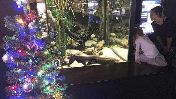 Du khách sốc khi thấy lươn phóng điện thắp sáng thông Giáng sinh - Ảnh 1.