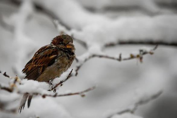 Chim bị nhỏ dần đi vì biến đổi khí hậu - Ảnh 2.