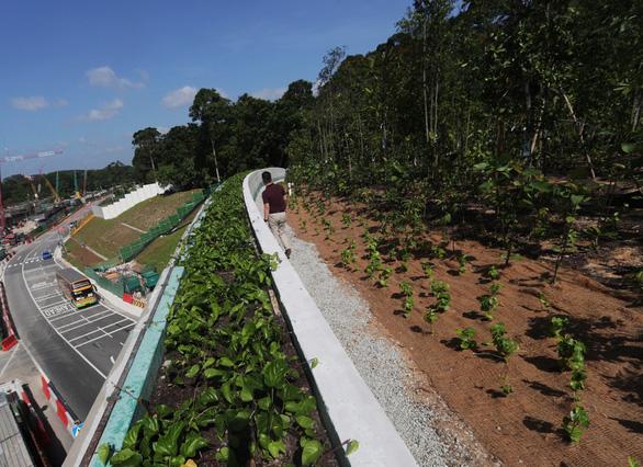 Singapore làm cầu vượt trồng cây rừng dành cho động vật - Ảnh 2.