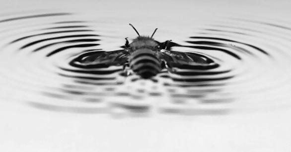 Giải mã khả năng 'lướt ván' siêu đẳng ở loài ong - Ảnh 2.