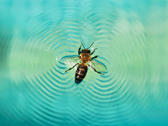 Giải mã khả năng 'lướt ván' siêu đẳng ở loài ong - Ảnh 1.