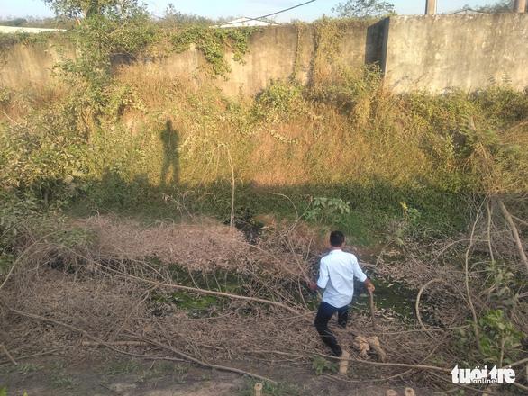 Yêu cầu giải quyết tình trạng ô nhiễm trại heo Vissan Bình Thuận - Ảnh 1.
