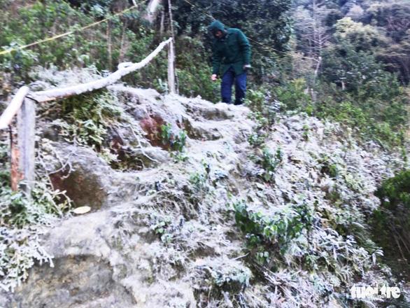 Nhiều vùng núi cao Nghệ An 0 độ C, băng giá phủ cây cối - Ảnh 3.
