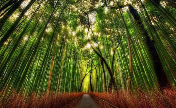 Những khu rừng có một không hai trên thế giới - Ảnh 1.