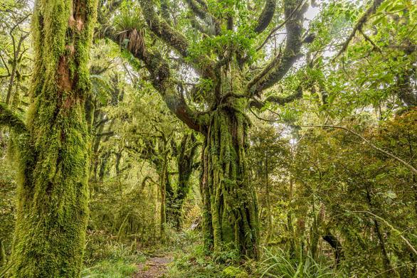 Những khu rừng có một không hai trên thế giới - Ảnh 5.