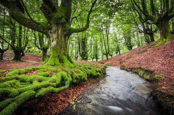 Những khu rừng có một không hai trên thế giới - Ảnh 2.