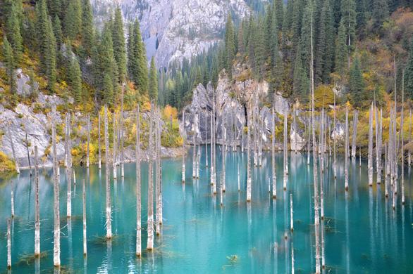 Những khu rừng có một không hai trên thế giới - Ảnh 8.
