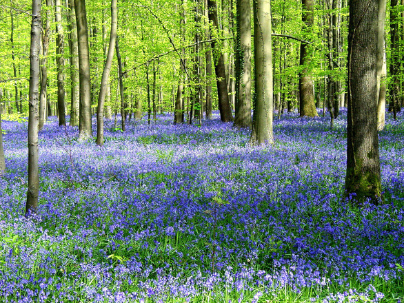 Những khu rừng có một không hai trên thế giới - Ảnh 4.