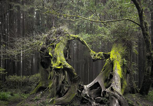 Những khu rừng có một không hai trên thế giới - Ảnh 6.