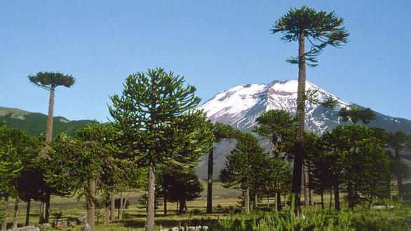Những khu rừng có một không hai trên thế giới - Ảnh 9.