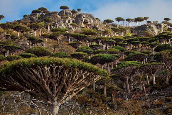 Những khu rừng có một không hai trên thế giới - Ảnh 3.