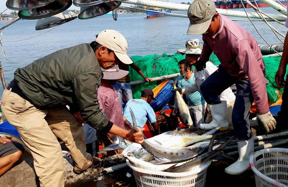 Đi biển đầu năm, ngư dân Quảng Trị trúng hơn 5 tỉ đồng cá bè vàng - Ảnh 1.