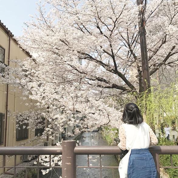 Người Nhật dự báo hoa anh đào nở bằng cách nào? - Ảnh 3.