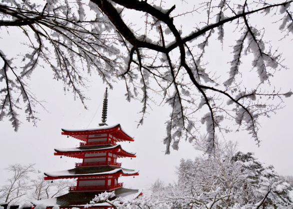 Ngắm tuyết trắng, anh đào ở Nhật Bản tháng 2 - Ảnh 1.