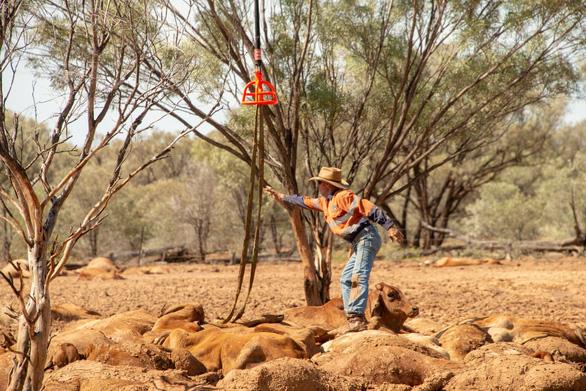 Tận thế ở Queensland - Ảnh 5.