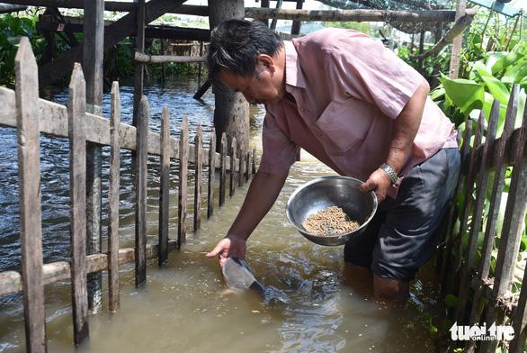 Lão nông dụ cá vào ngắm như thú cưng được bộ trưởng tặng bằng khen - Ảnh 1.