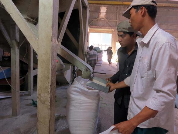 xuất khẩu lúa