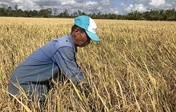 Chính phủ sẽ bàn việc tiêu thụ lúa cho nông dân - Ảnh 1.