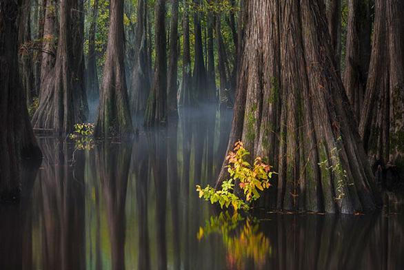 Trái đất tráng lệ trong cuộc thi ảnh phong cảnh quốc tế - Ảnh 13.
