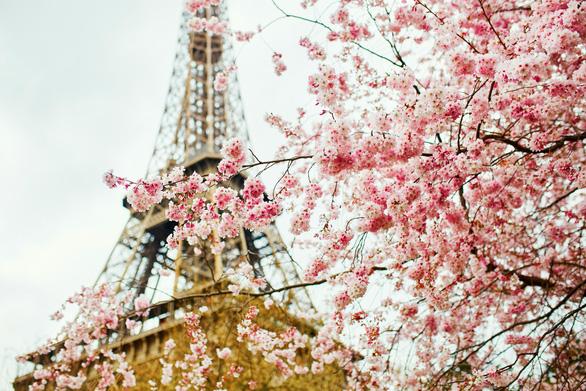 Những nơi ngắm hoa anh đào tuyệt đẹp - Ảnh 8.